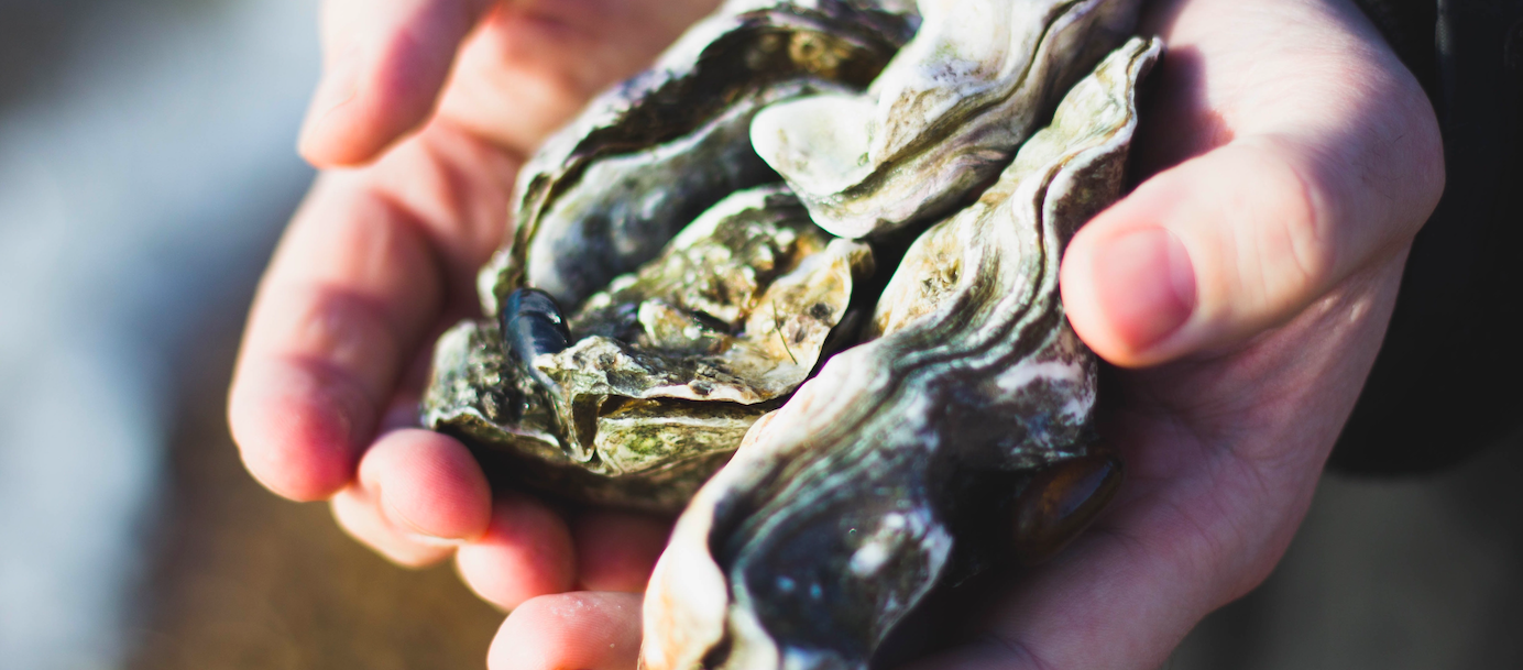 Photo by Charlotte Coneybeer on Unsplash | Oyster Season | Snag-A-Slip