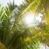 Photo by Martin Zangerl on Unsplash | Miami, Florida | Snag-A-Slip