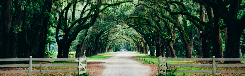 Savannah Photo by Ashley Knedler on Unsplash | Day Trip | Snag-A-Slip